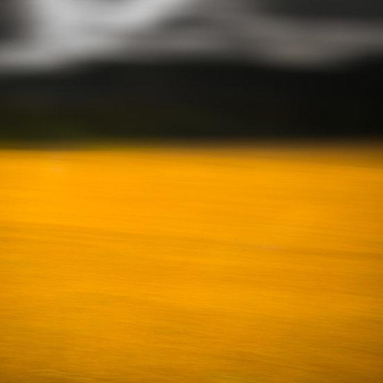 Autumn Gold #3