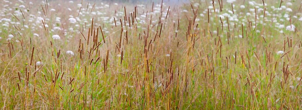 JUG END GRASSES