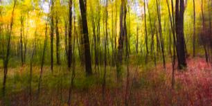8 Woodland Study #72-2.jpg