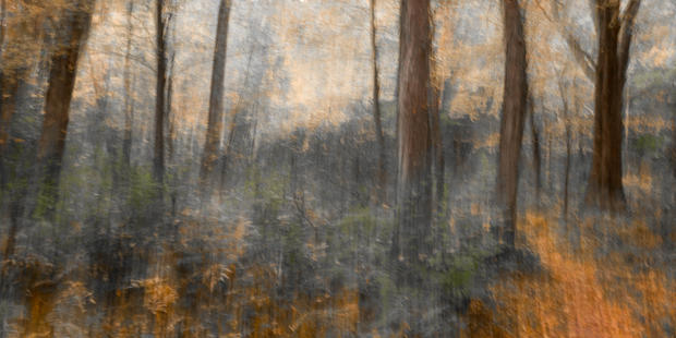 85 Woodland Study #78.jpg