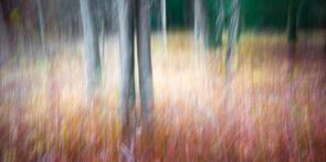 4 Woodland Study #45-2.jpg