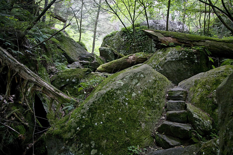 ROCKS AND TREES - ICE GLEN
