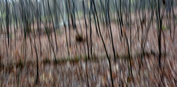John Atchley_WoodlandStudy_Woodland Stud