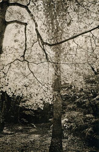 VEILED TREE