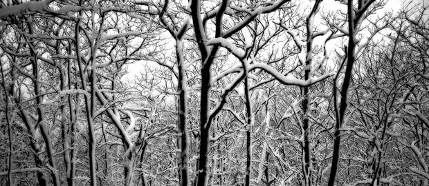 John Atchley_OutofDarkness_Snow Trees #1