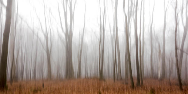Woodland Study #65.jpg