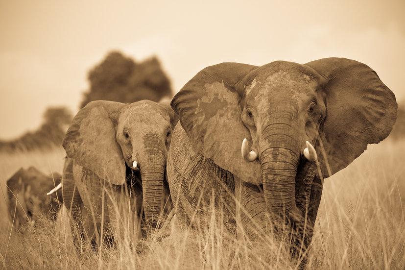 VUMBURA PLAINS #15 (AFRICA)