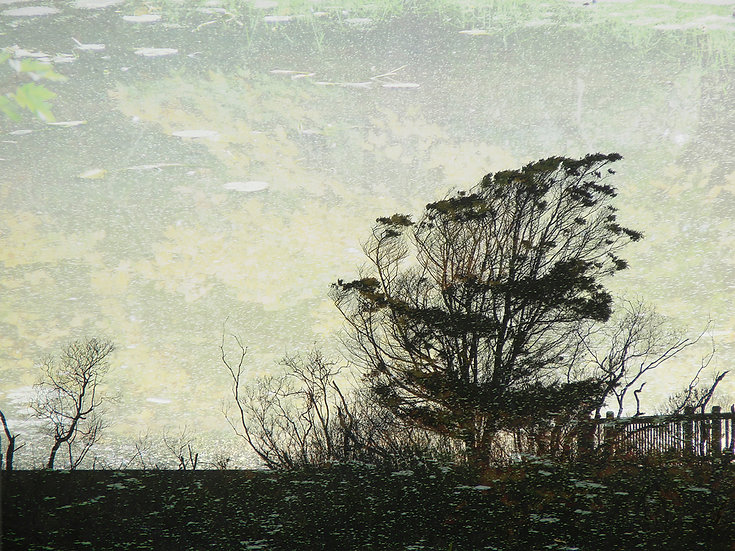 CHINCOTEAGUE TREE