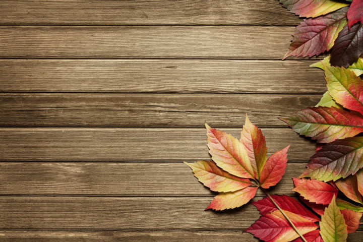Fall Background.jpg