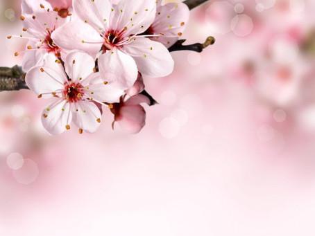 Vamos espalhar flores!