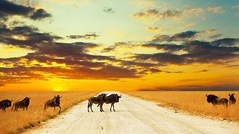 Yurtdışı Afrika Turları