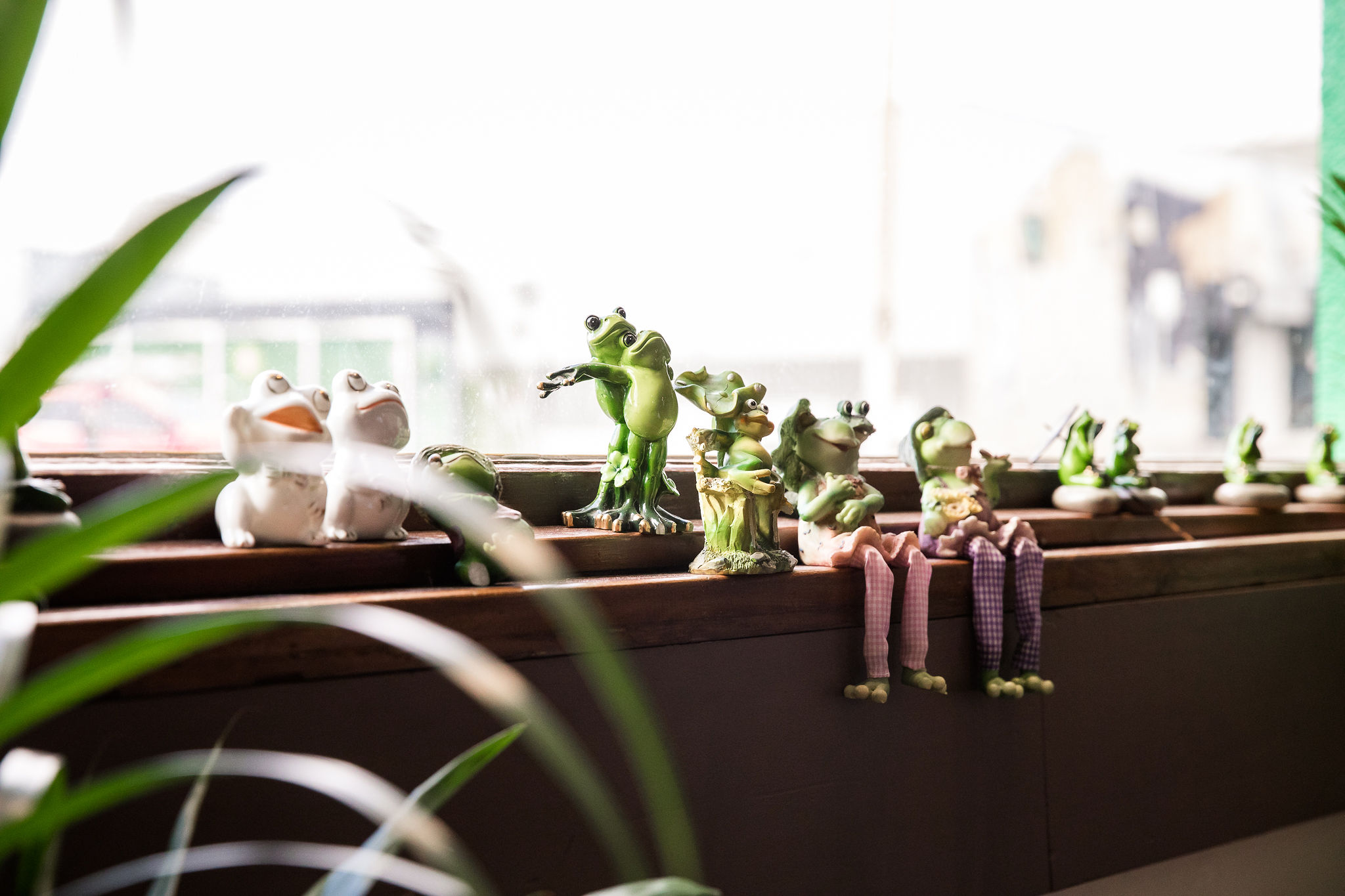 Frogs at the frog