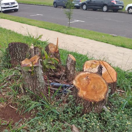 Árvores cortadas em terreno ao lado da Câmara de Vereadores de Cianorte. Falar o quê!!