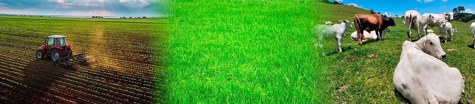 Agrocampo-agropecuaria-samambaia.jpg
