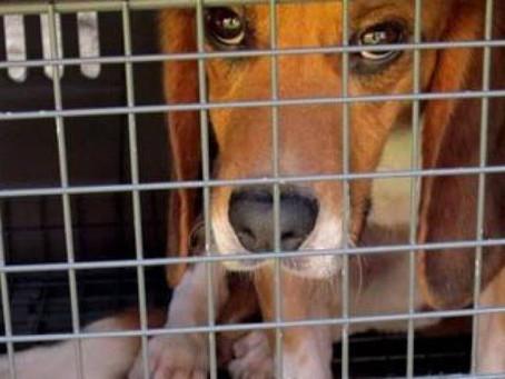 Maus-tratos a cães e gatos agora podem render até cinco anos de cadeia