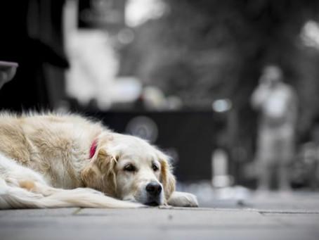 Animais perdidos: dicas para reencontrá-los
