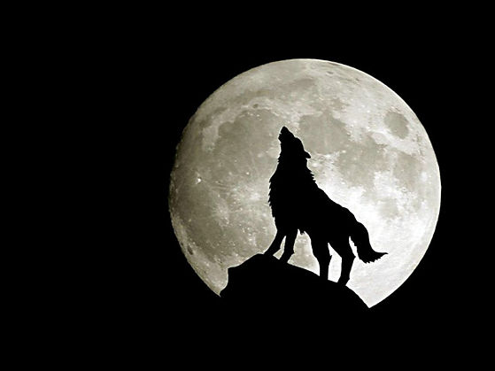 Moon Wolf Wallpaper HD  1619971558 - 640