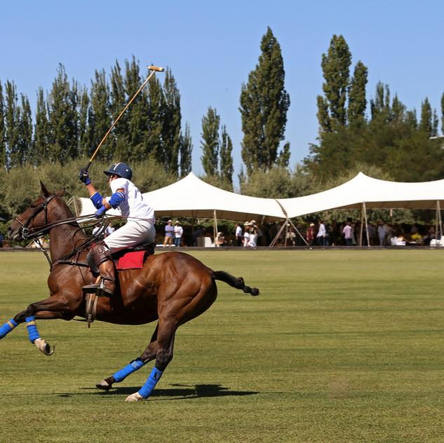 13. Polo caballo