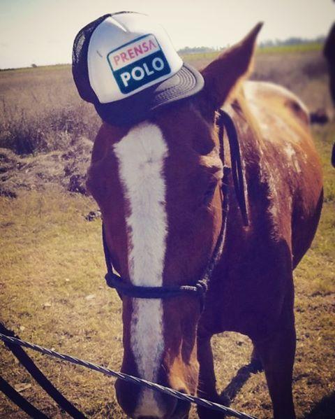 Dale que mañana es lunes 🐴😣 gracias _ibarravalee  por la foto desde #LaPampa _#polo #caballosdepolo #polodelinterior #PrensaPolo