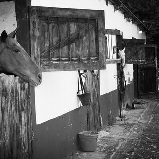 Condenado por robar caballos de polo, en Pilar, para faenar