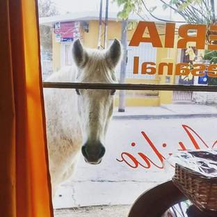 La historia de Bizcochito, la yegua que pide pan en Capilla del Monte