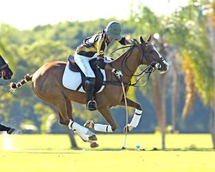 Palm Beach Equine debutó con un triunfo en la Ylvisaker Cup