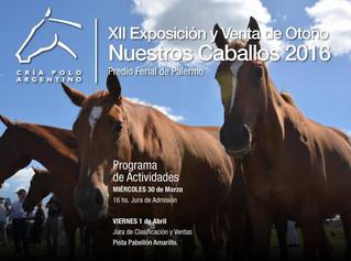 """Polo Argentino en """"Nuestros Caballos"""""""
