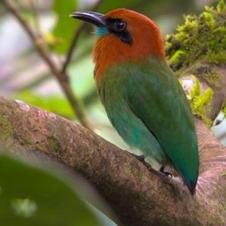 Bird Watching - From $49