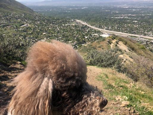 Did You Say Millcreek, Utah Dumpster Rental?