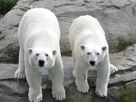 Bund: 180.000 Euro Zuschuss für Rostocker Zoo
