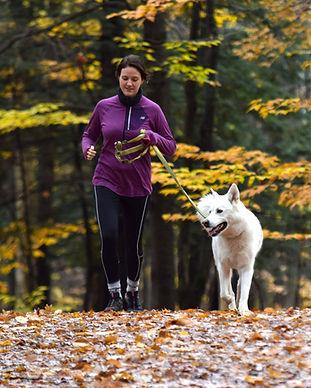 Jogging chien.jpg