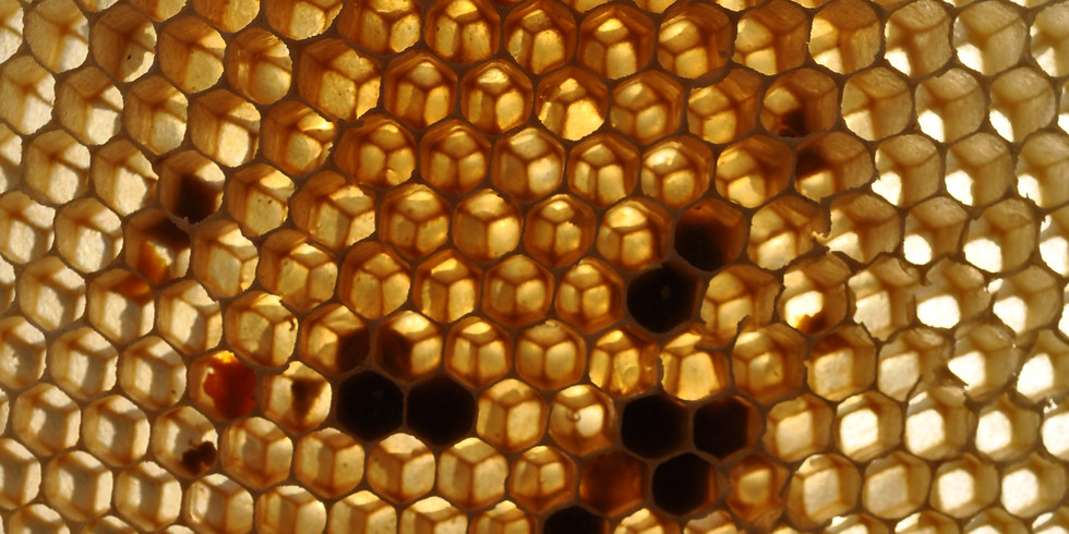 Introduction to Beekeeping Overview - $10