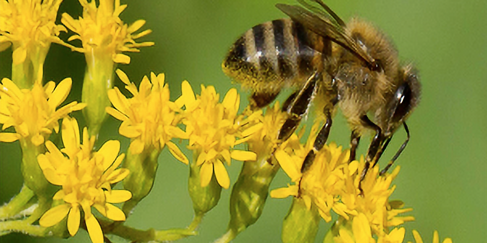Beginner Beekeeper Course - 7 weeks of instruction, $75