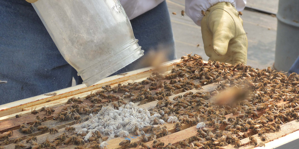 Fall Hive Assessment – $20