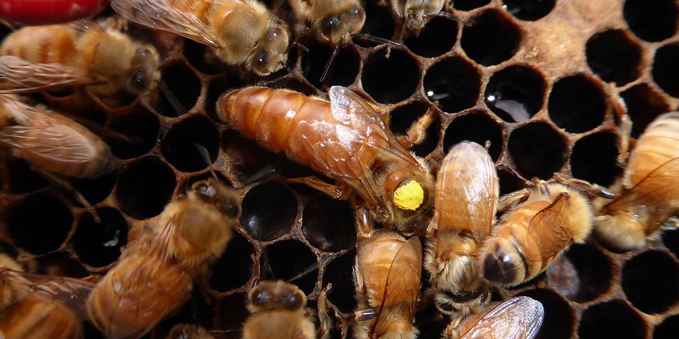 EVENT CANCELLED -- Queens and Nucs for Sale!