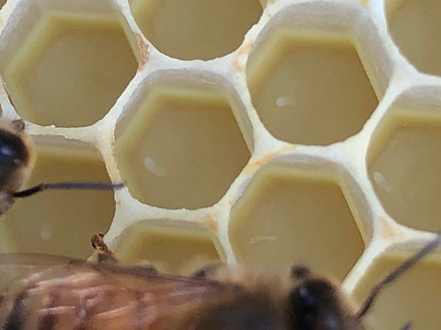 Nucleus Hive - Please talk to Jeff Hall before ordering!!!
