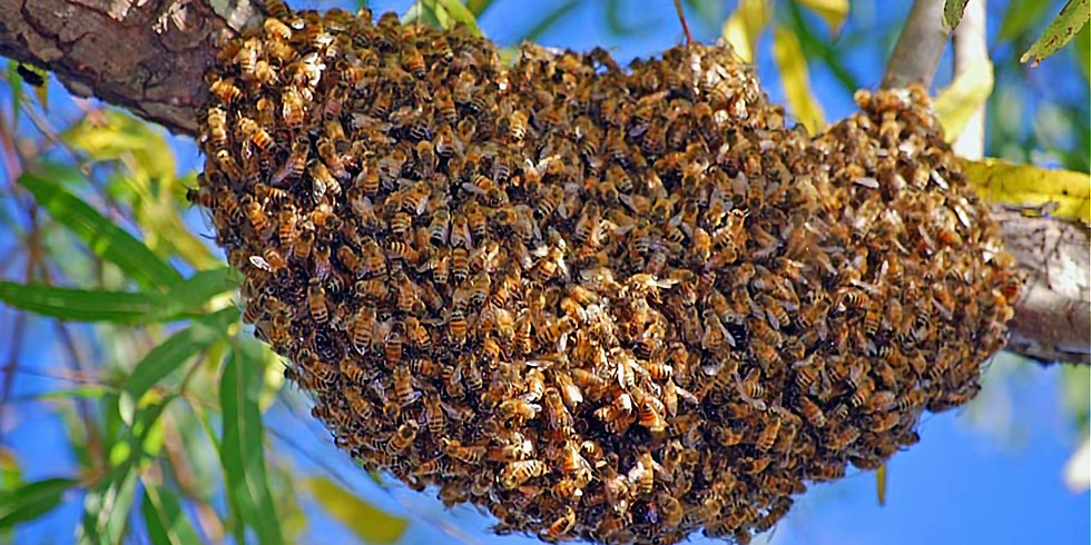 Rescheduled Due to Weather: Swarm Management Class, $20
