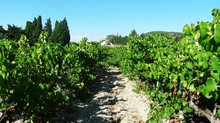 The Elegant Flavours of Vacqueyras: On the Côte-Du-Rhône Wine Trail