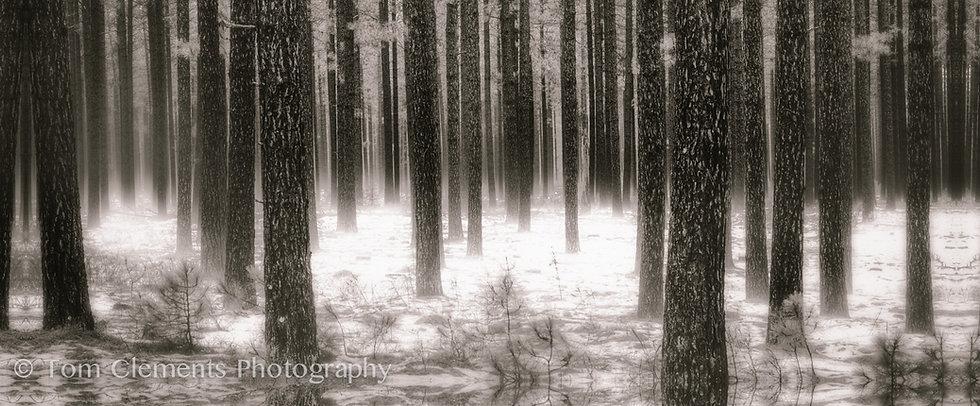 Deep Forest Mist