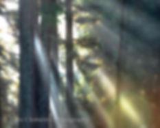 Morning in the Redwoods.jpg