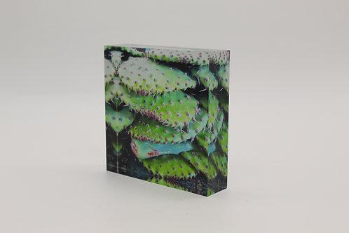"""""""Cactus Pads"""" Acrylic Block"""