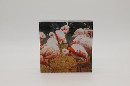"""Flamingos"" Acrylic Block"