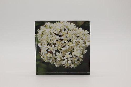 """White Flowers"" Acrylic Block"