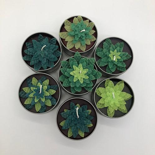 Succulent Tin Candles