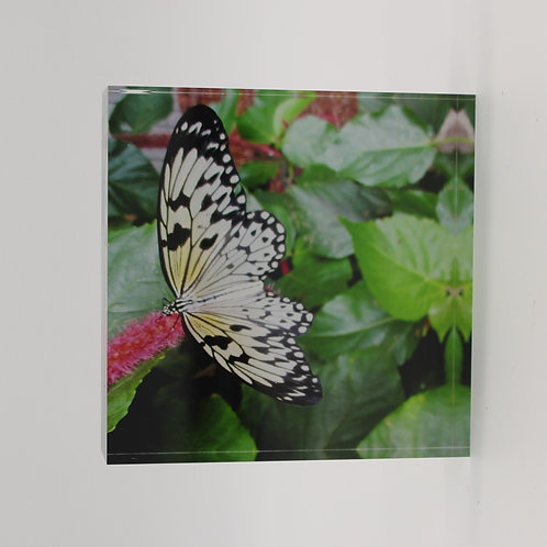 """""""Butterfly"""" 4 in Series of 4 Acrylic Block"""