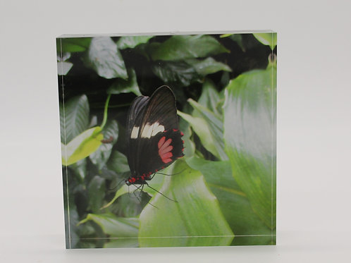 """Butterfly"" 2 in Series of 4 Acrylic Block"