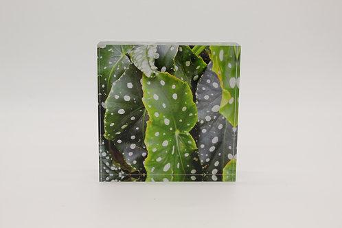 """""""Raindrops"""" Acrylic Block"""