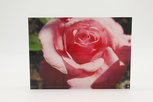 """Pink Flower"" Acrylic Block"