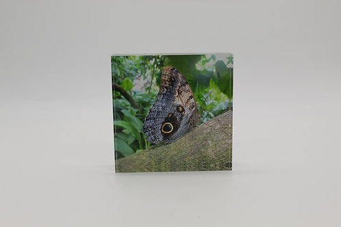 """""""Butterfly"""" 1 in Series of 4 Acrylic Block"""