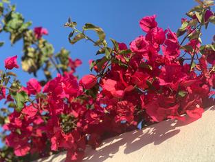 Färgstarka Andalusien